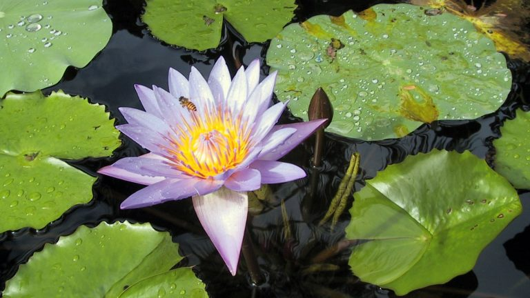 ROUNDMAP-Lotus